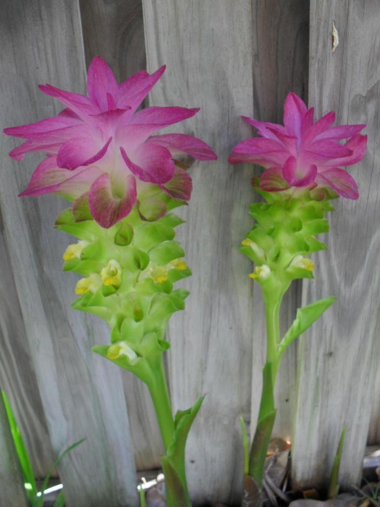 Weird Looking Flowers 1 By Vomitingunicorn On Deviantart