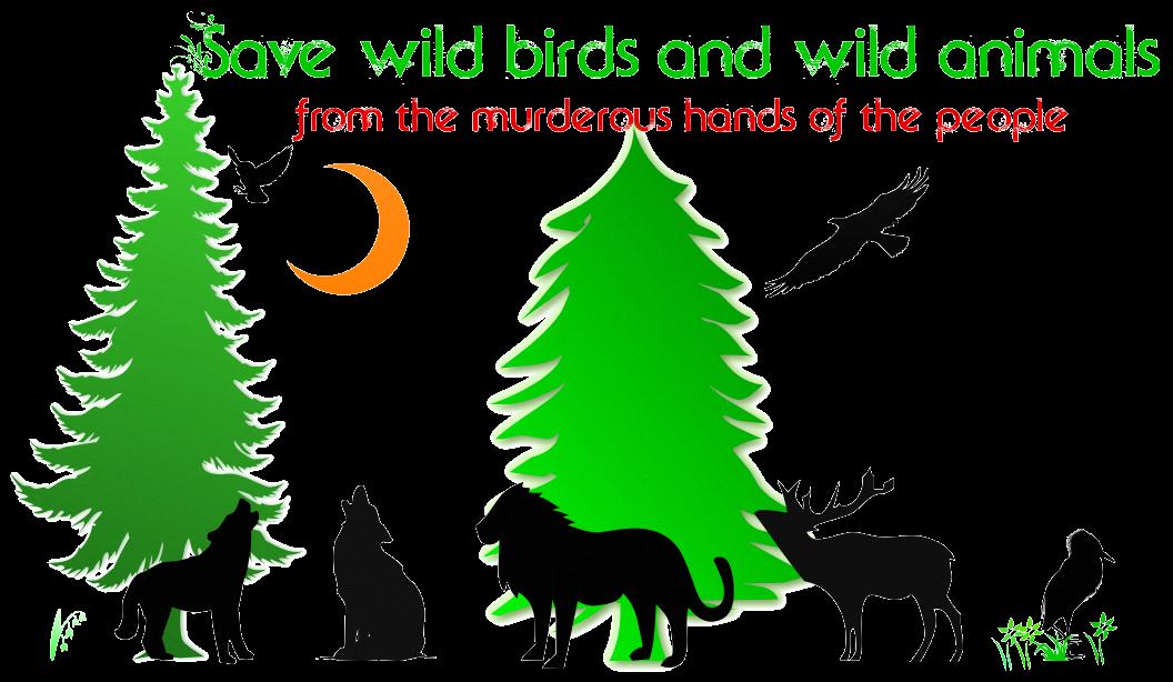 save wild animals essay