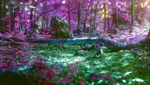 forest Purple