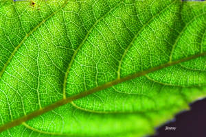 Leaf in macro by jcphotos