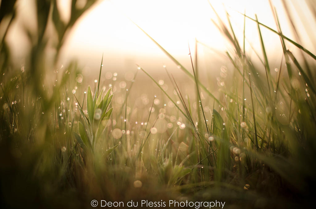 Rolling in the Wet Grass by Deond3