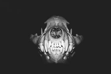 Kiss me please! by Phobos-x