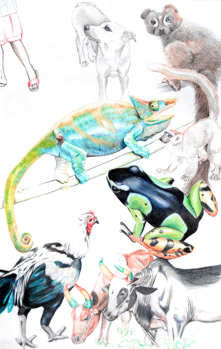 Madagascar Fauna by racehell