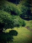 Secret Garden by DarkAngeLP26