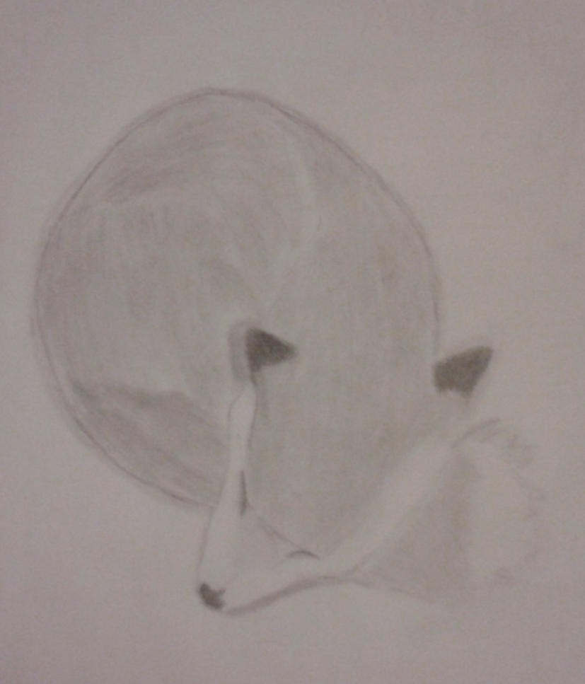 Sleeping Fox by JustDrawOn