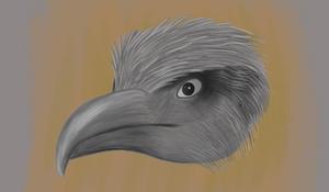 Another Bird doodle