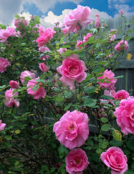 Ritas Spring Garden