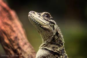 Animal I by herooftheheadset