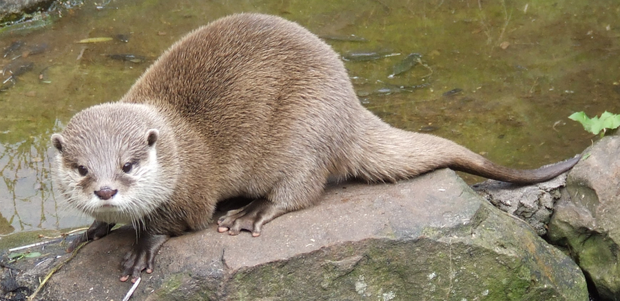 Otter by x-cyber-centauri-x