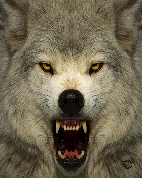 angry werewolf face - photo #31