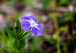 Well hello, little flower