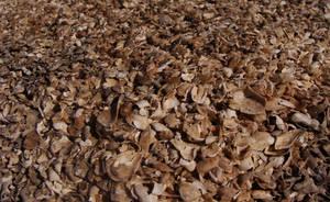 Shells by Manwathiell-Stock