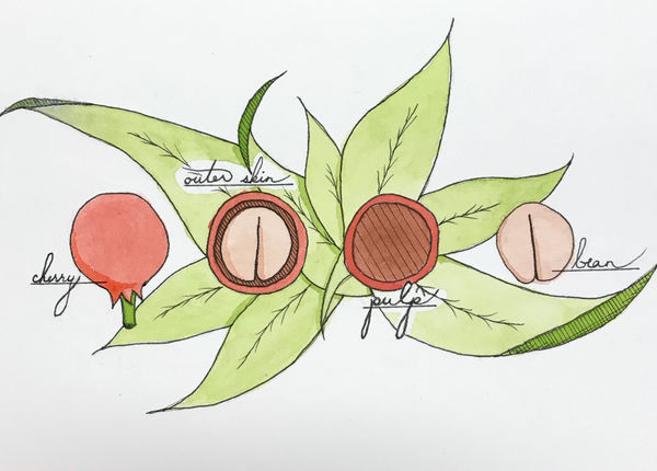 Coffee Cherry Watercolor - Christmas gift 2018 by minniearts