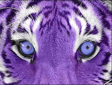 Purple_Tiger__by_stacynina.png