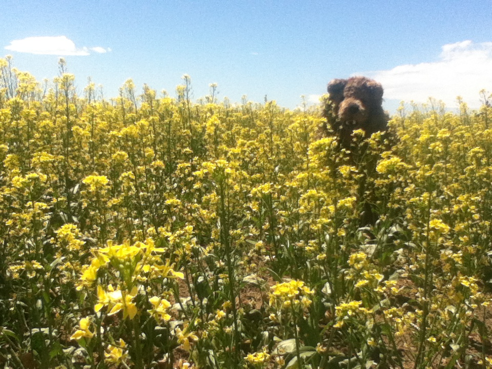 Bear in the flowers by MonstrositiesNZ