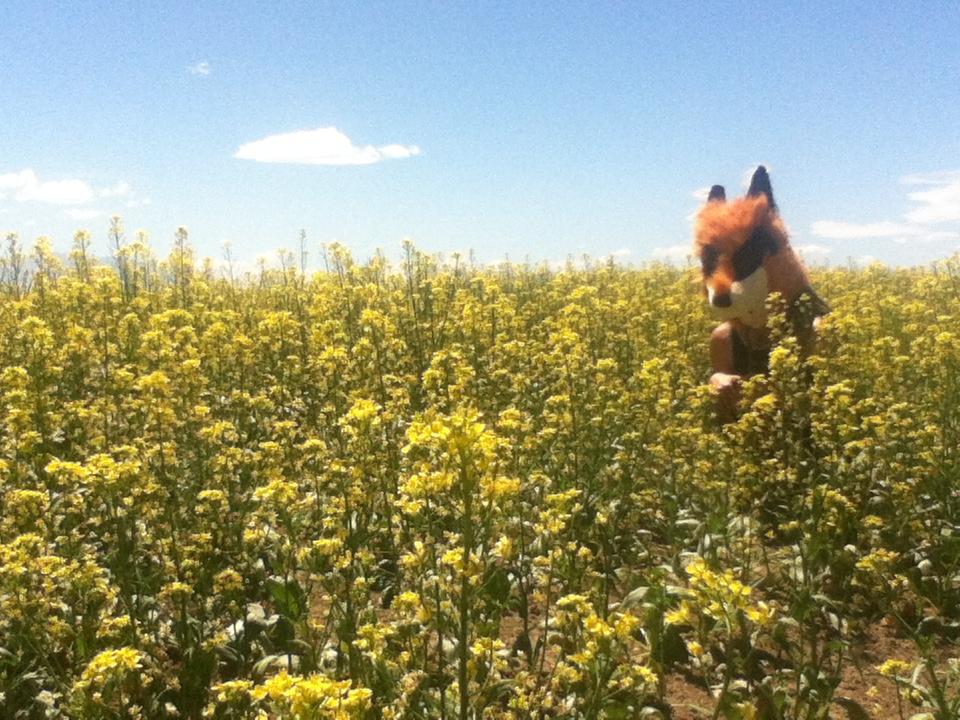 Fox in flowers by MonstrositiesNZ