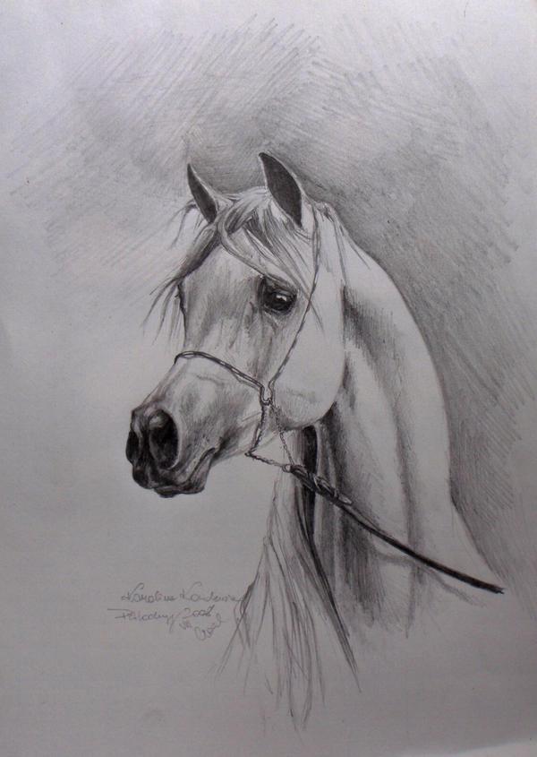 Arabian Horse Pencil Drawings Arabian Horse Pencil Drawings