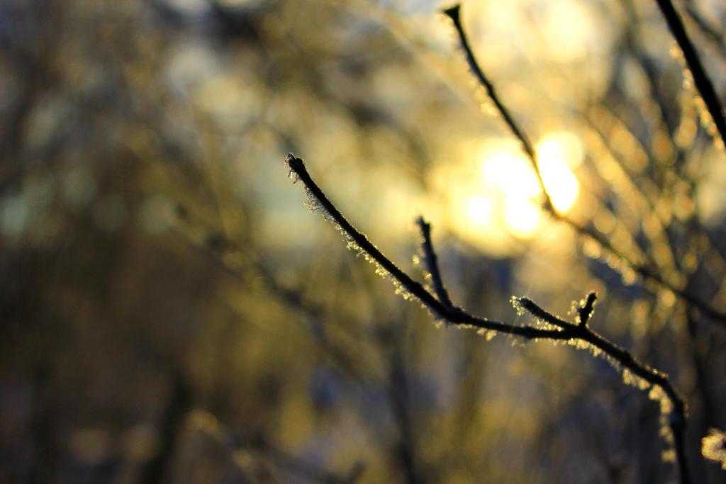 Winter sunrise by Syzygi