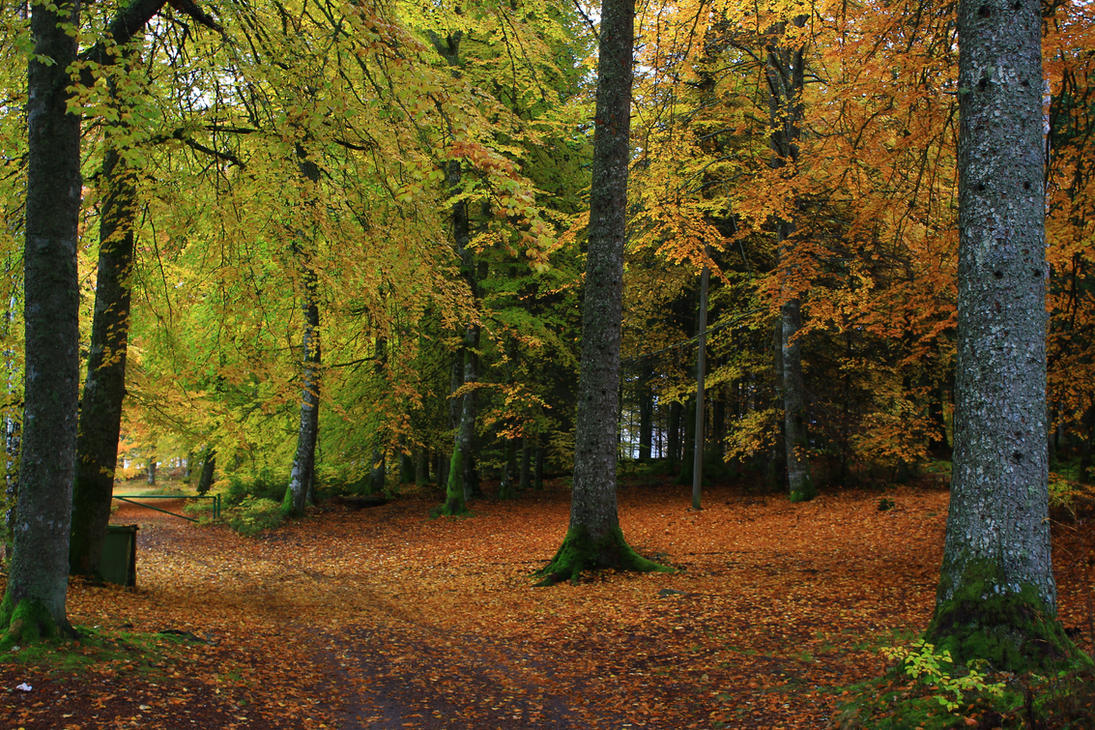 Walk in the woods by Syzygi