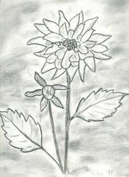Flowers by BlackSweetness