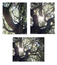 Tree by BlackSweetness