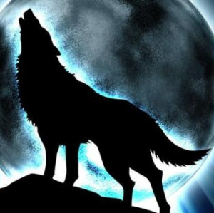 Wolf-Hybrid-Lover836's Profile Picture