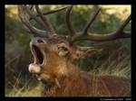 Bellow, Yell, Shout, Roar II