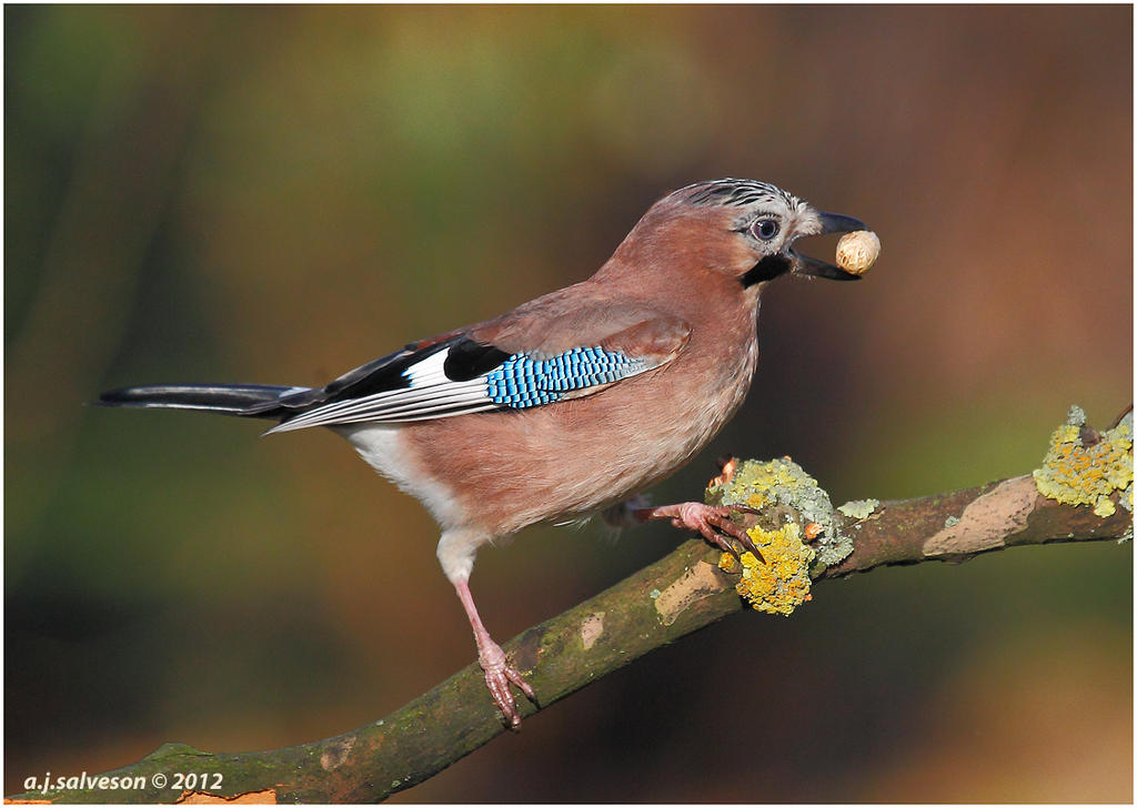 Jay And Nut. by andy-j-s