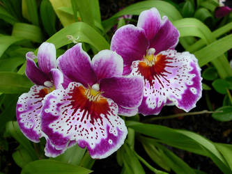 Unknown Orchids