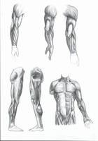 anatomy + shading study by saTHOMASo