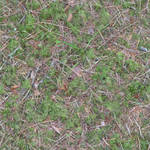 Seamless mossy ground