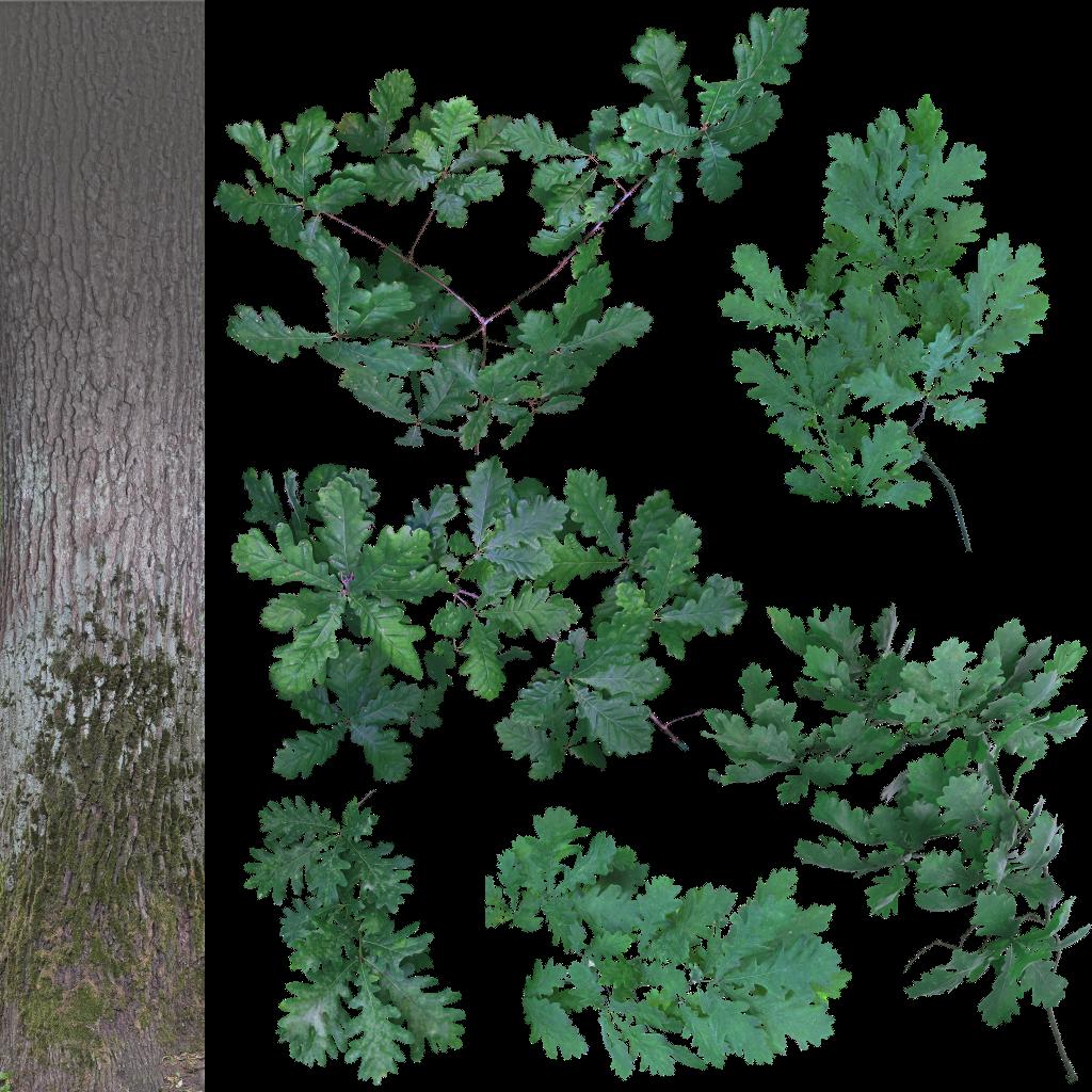 Quercus robur oak cutout texture by lauris71 on deviantart for Muro robur