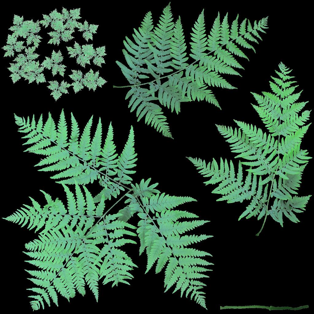 Bracken - Pteridium aquilinum - cutout texture by lauris71 ...