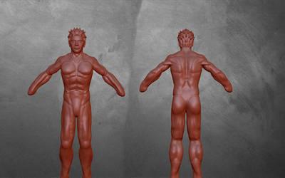 male anatomy by MichaelDickey