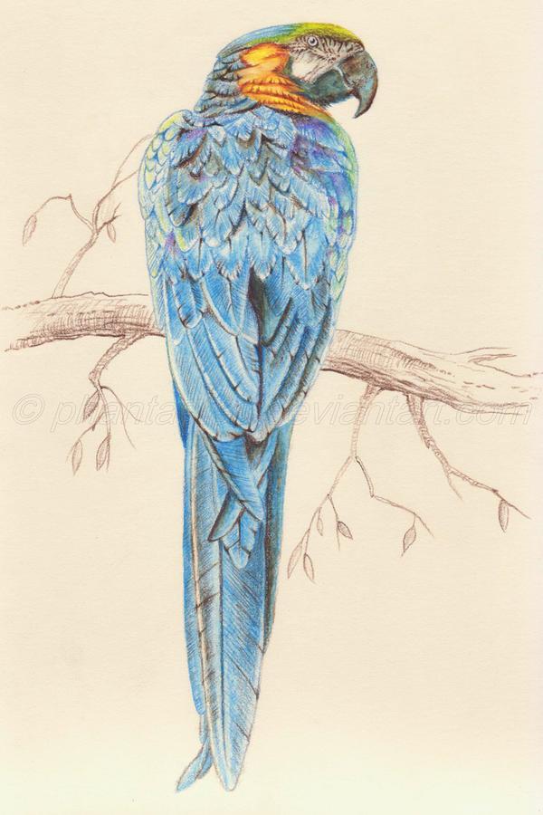 Macaw 2 by phantastes