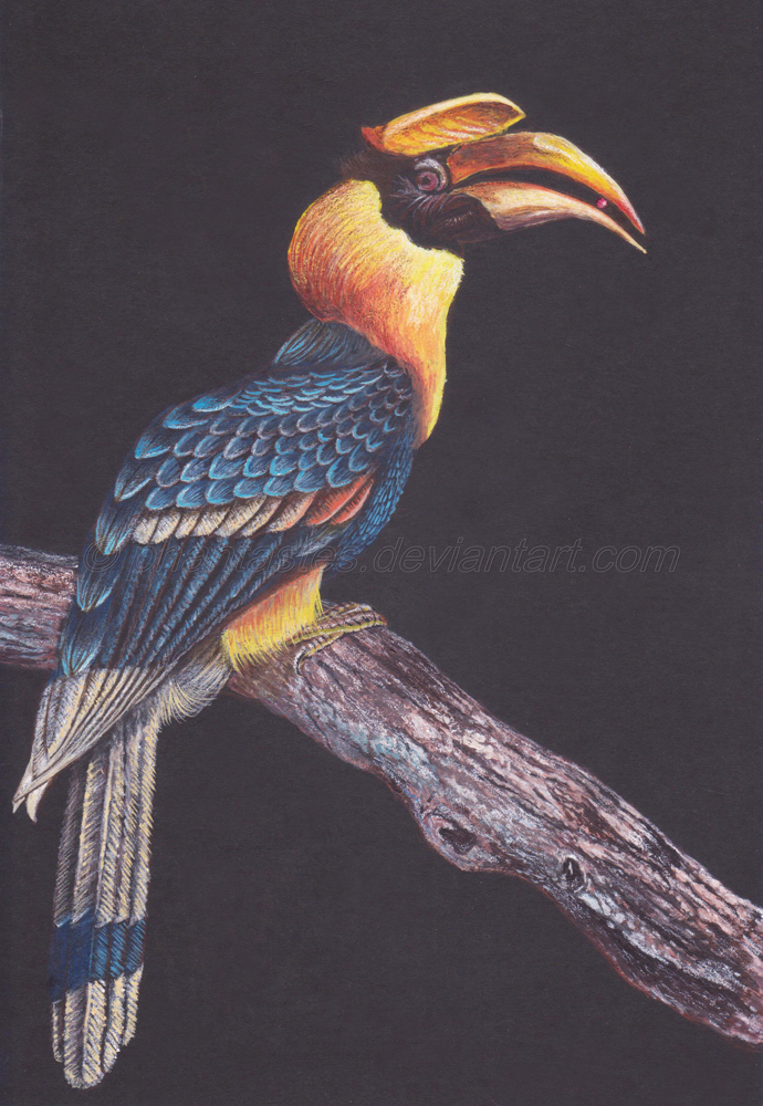 Great Hornbill By Phantastes On DeviantArt
