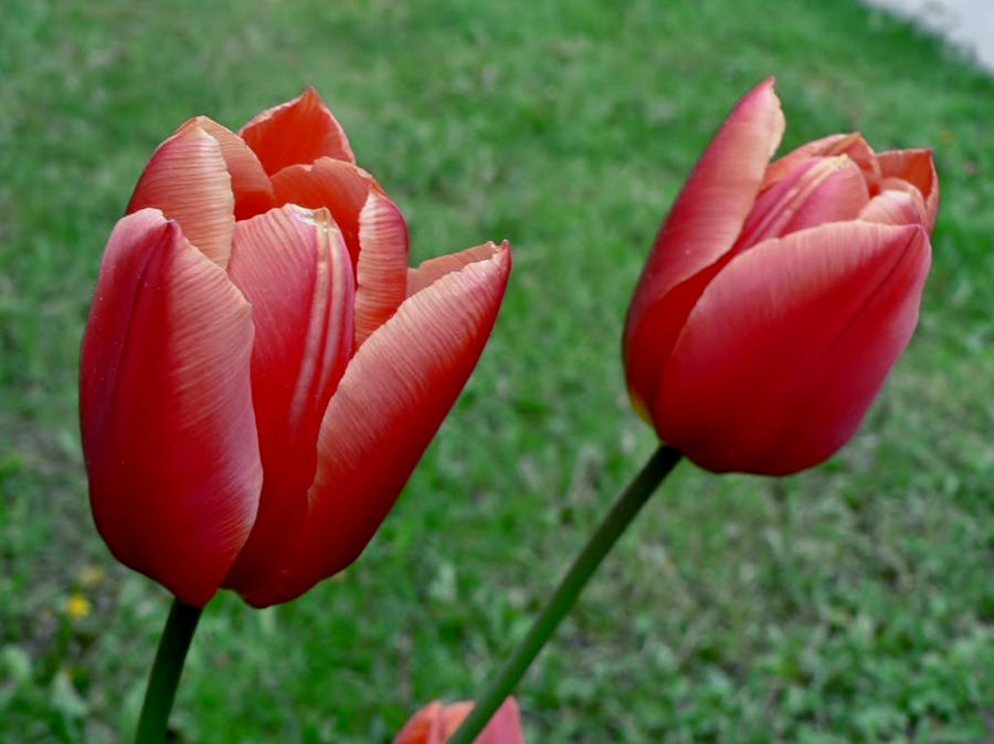 Red... by billndrsn