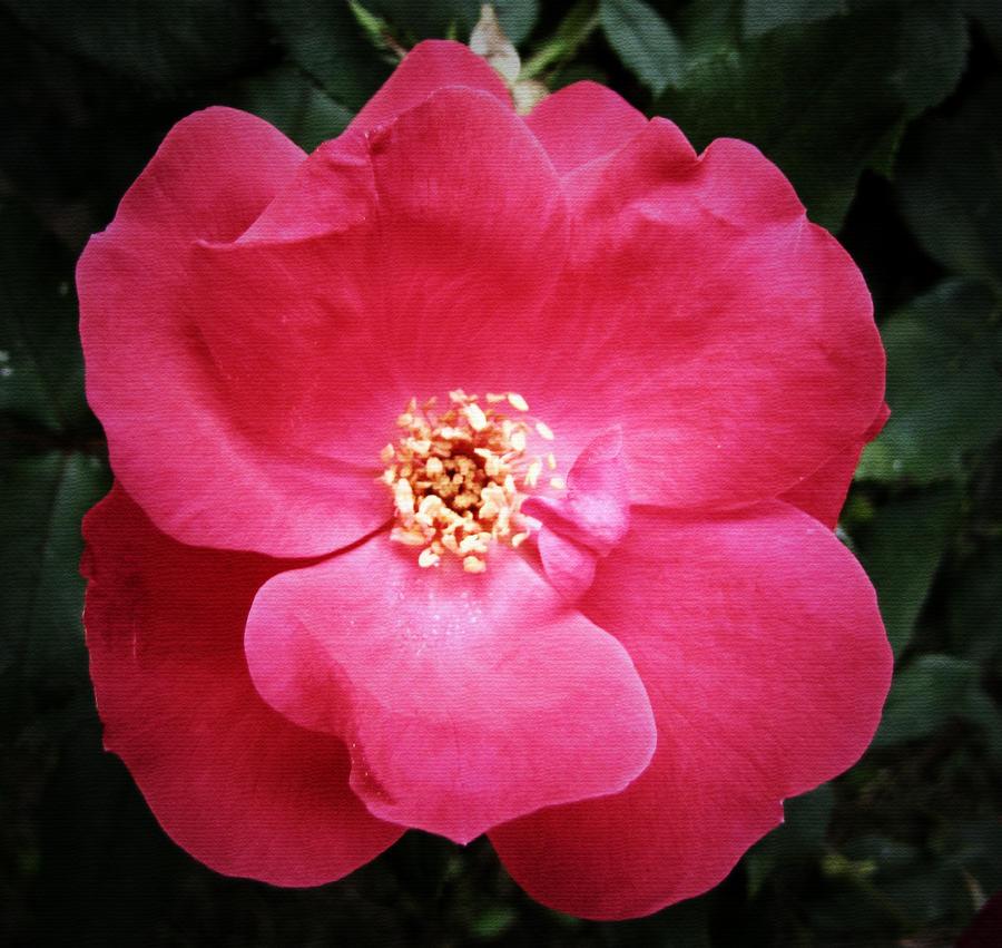 Pink Power 2... by billndrsn