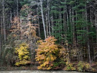 On The Banks Of The Clover Fork River. by billndrsn
