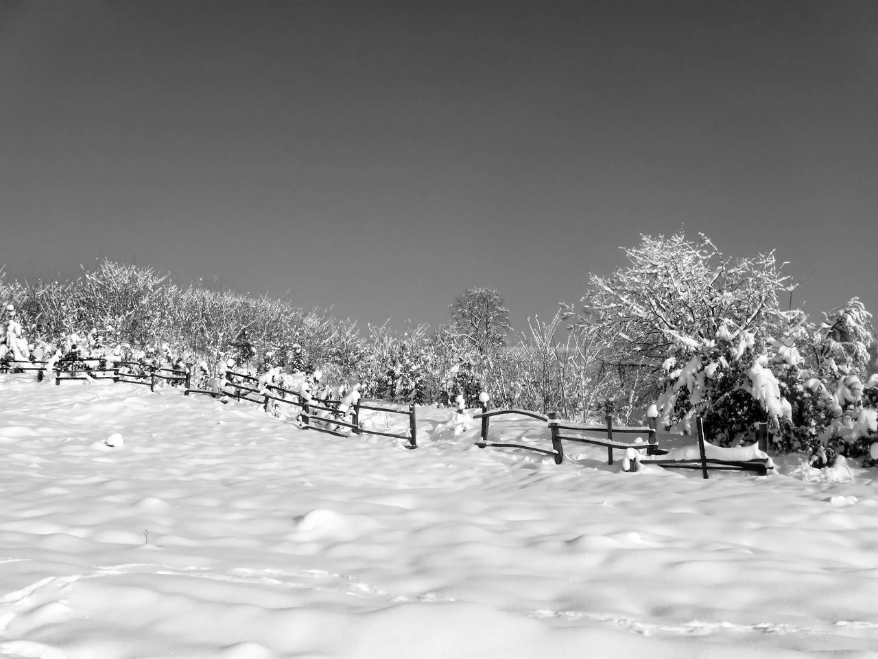 winter in black and white by DifferentWorld13 on DeviantArt