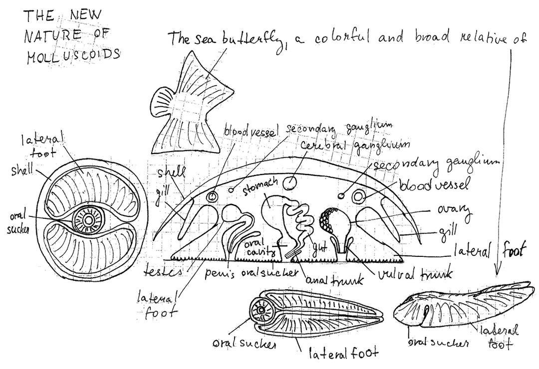 Molluscoid\'\' anatomy - BRAND NEW! by PeteriDish on DeviantArt