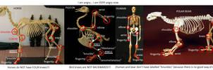 anatomy nazi!