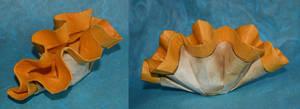 Orange Clam