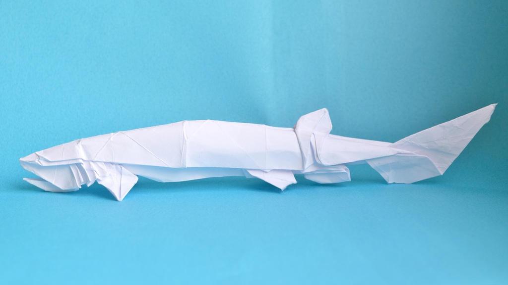 Frilled Shark Test Fold By Peteridish On Deviantart