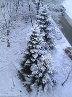 snowing tree by fenchity