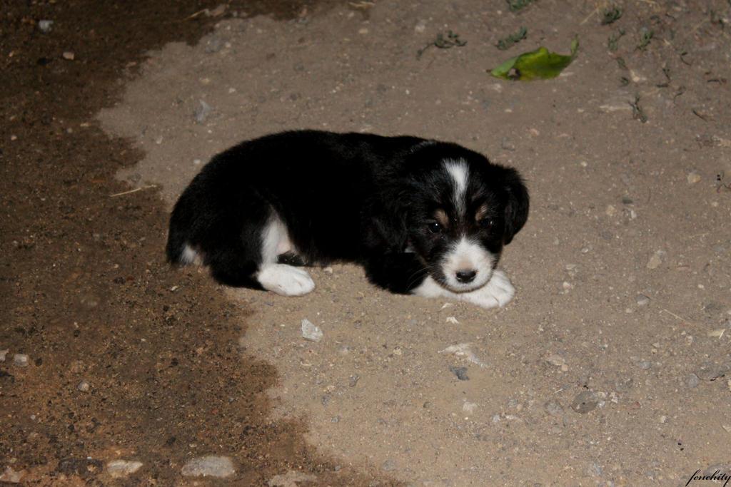 Cute little fluffy puppy