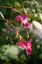 Pink Flowers by BloodCreek20