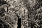 Botanical Garden III