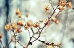 Winter 2 by Da-Cha-Cha