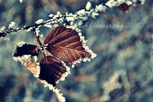 Frost by Da-Cha-Cha